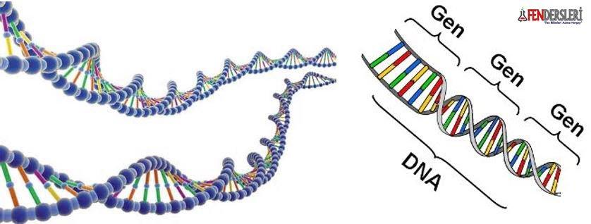 gen-nedir