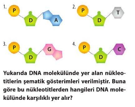 dna-ve-genetik-kod-test-2-2