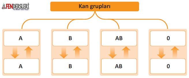 kal-gruplari
