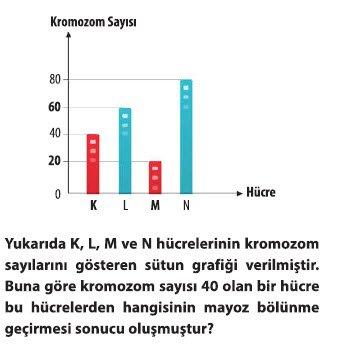mayoz-1-10