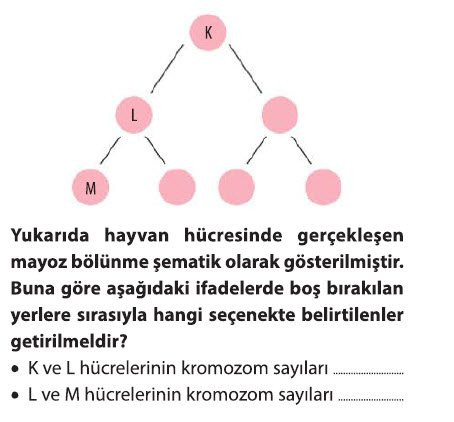 mayoz-2-3