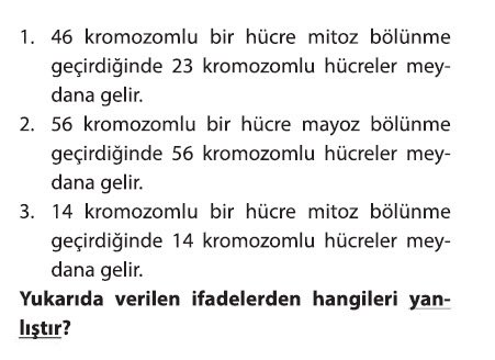 mayoz-2-4