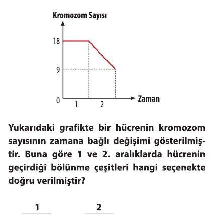 mayoz-2-5