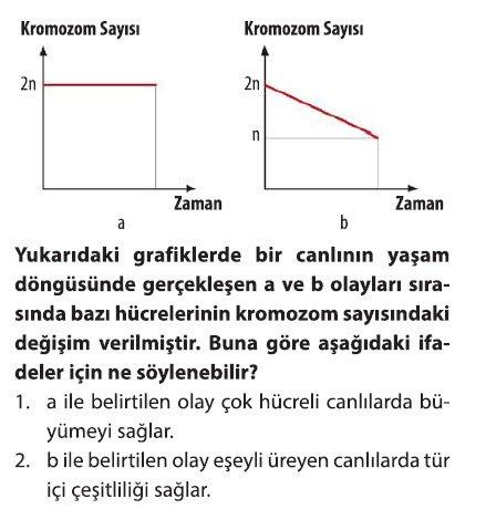 mayoz-2-6