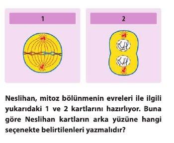 mitoz-1-8