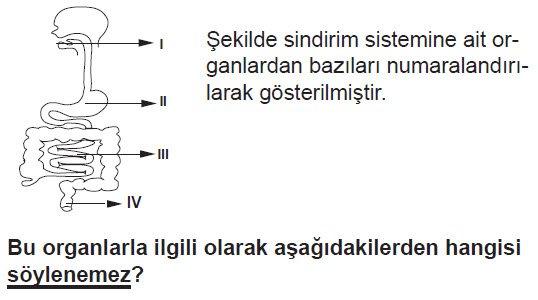 sindirim-soru-2