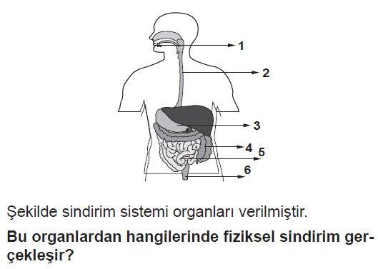 sindirim-soru-4